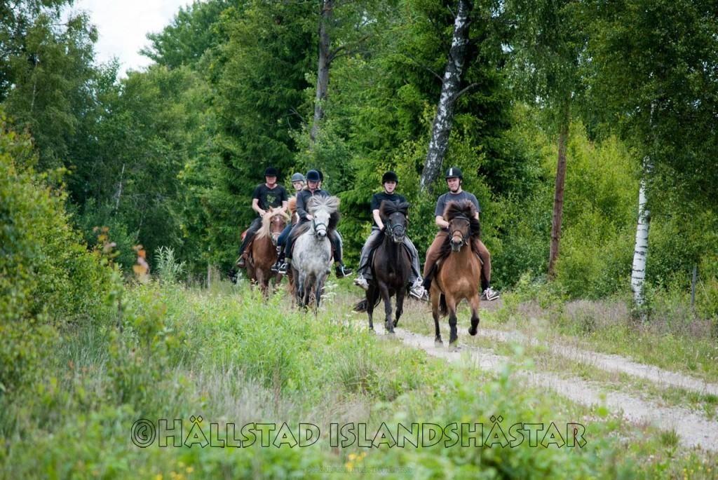Turridning för nybörjare hos Hällstad Islandshästar AB i Ulricehamn.