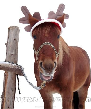 Julen 2015 hos Hällstad Islandshästar
