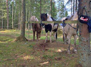 Miniweekend hos Hällstad Islandshästar AB i Ulricehamn.